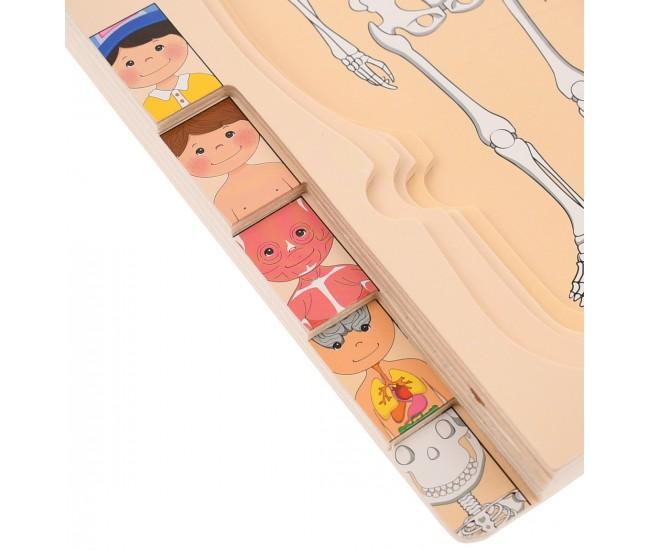 Set corpul uman din lemn, jucarie pentru invatat anatomie, fata - 22200145F